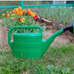 Полив тюльпанов