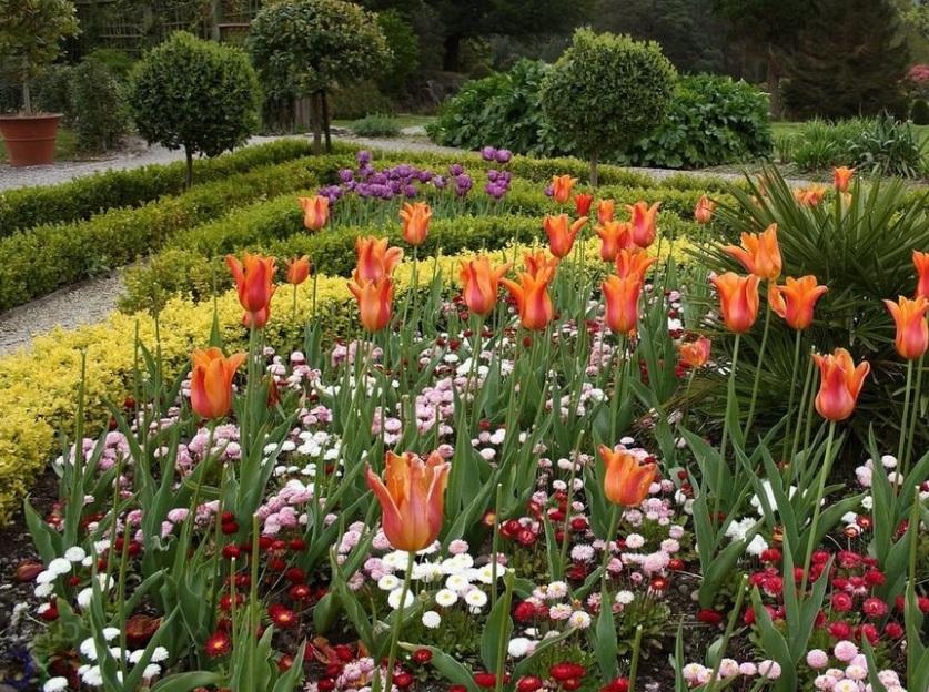 Уход за лилиецветными тюльпанами