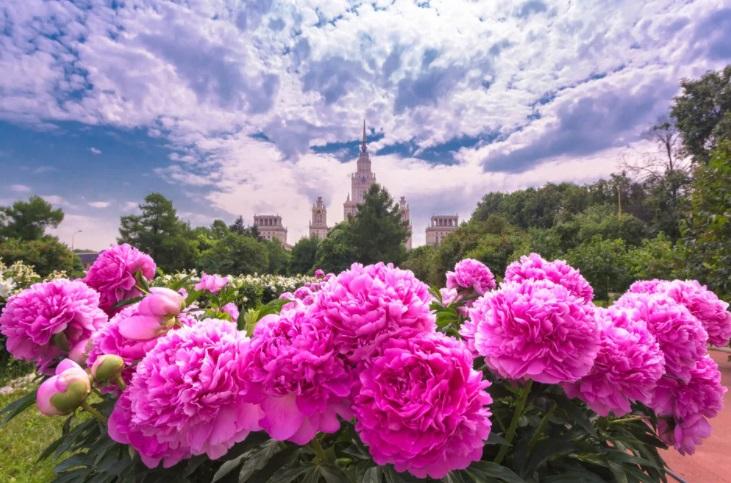 Цветы и их значение