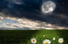 Самый подробный лунный календарь цветовода на май 2021 года